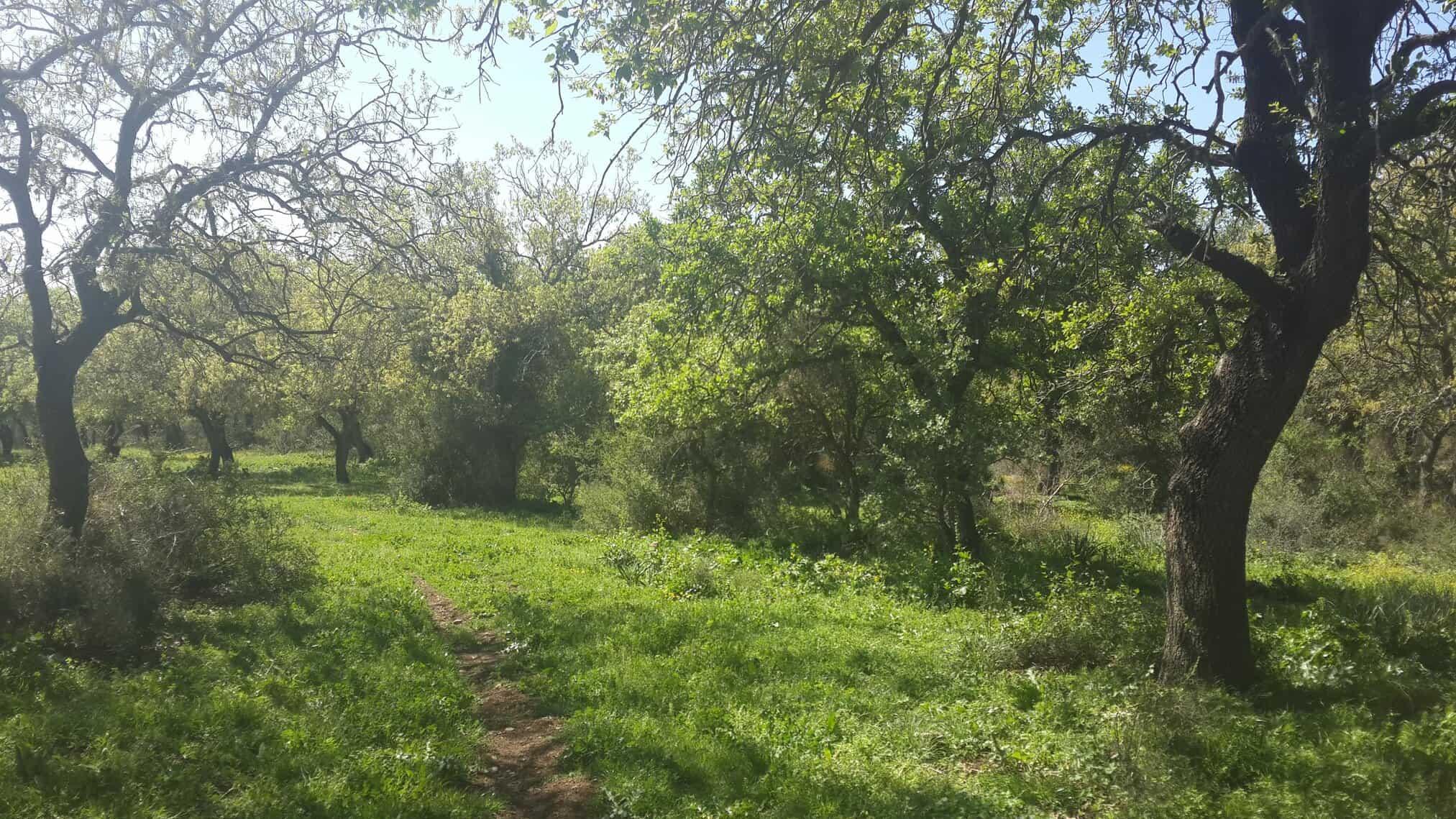 ליקוט ביער עמיקם