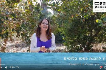 מתכון לממרח פסטו מבלוטים (וידאו)