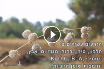 ליקוט זרעי סרפד – לא מה שחשבת